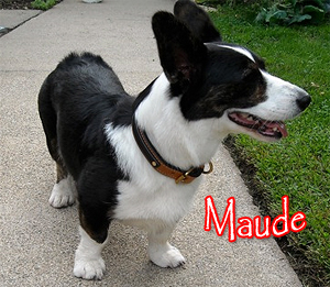 maude with leather dog collar